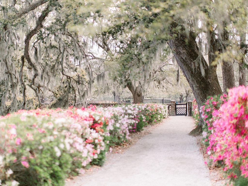 A path through the azalea gardens at Middleton Place in South Carolina